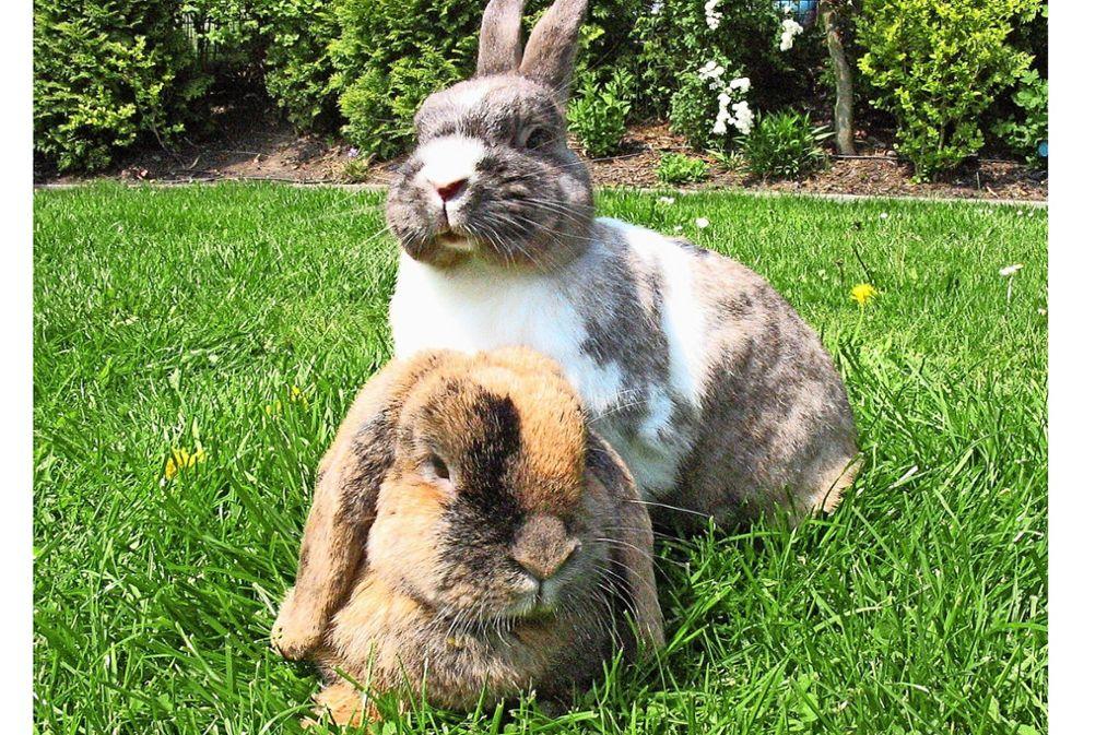 Süße Kaninchen. Foto: Kaninchenschutz e.V.