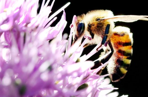 Referendum für Bienen: Kretschmann hält Abstand