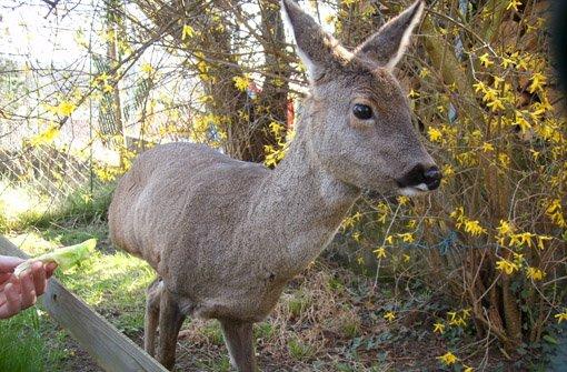 Susi - ein tierisch schönes Leben auf drei Beinen ist zu Ende