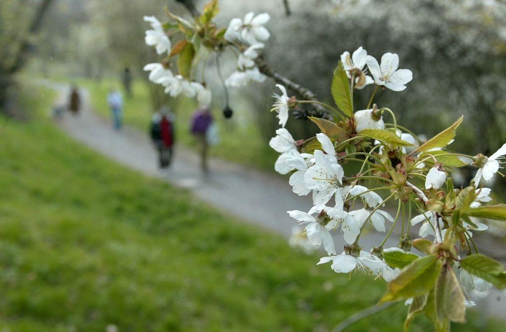 Um wettzumachen, was der Natur mit der Asphaltierung des oberen Weges genommen worden ist, will das Gartenamt 35 neue Obstbäume pflanzen. Foto: Archiv Frank Eppler