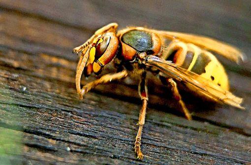 Wer diese Insekten tötet, kann ordentlich zur Kasse gebeten werden