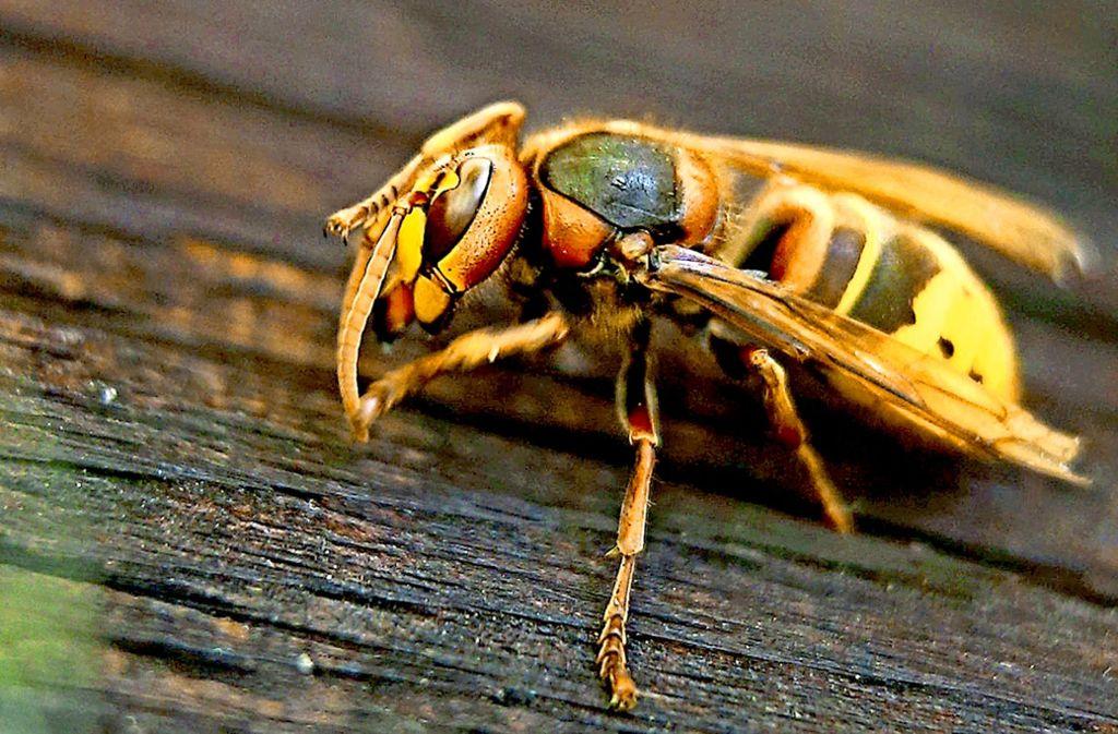 Frühlingszeit ist leider auch Wespenzeit. Foto: dpa