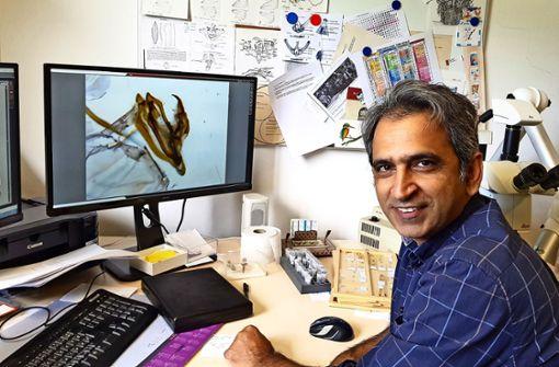 Forscher schließen Jahrhundertwerk über Motten ab