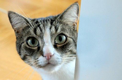 24. Oktober: Mit Luftdruckgewehr auf Katze geschossen