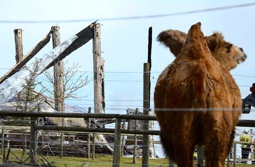 Der Kamelhof Rotfelden nach dem Feuer - nur fünf Tiere überlebten. Für den Besitzer Wilhelm Breitling eine Katastrophe. Foto: dpa