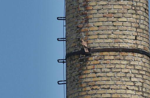 Tierrettung und Feuerwehr befreien Turmfalken