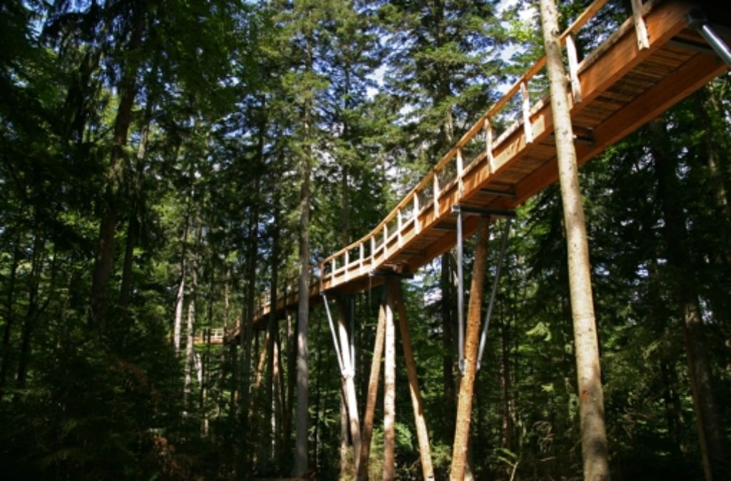 So wie hier im Bayerischen Wald soll der Baumwipfelpfad in 30 Metern Höhe durch den Wald führen. Foto: Erlebnisakademie