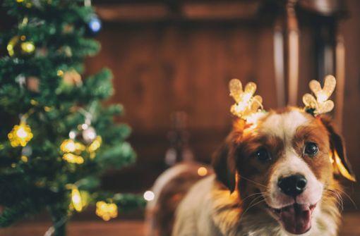 Hund, Katze und Hamster gehören nicht unter den Christbaum