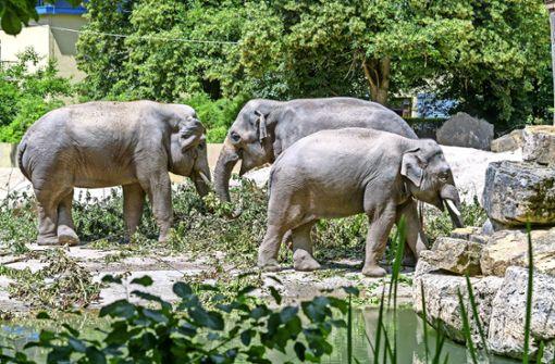 Im Zoo so aktiv wiein freier Wildbahn