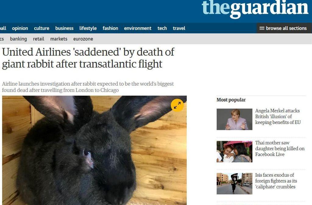Ende eines Hasen-Lebens: Mega-Rabbit verstarb jetzt auf einem Transatlantikflug. Foto: Screenshot/www.theguardian.com