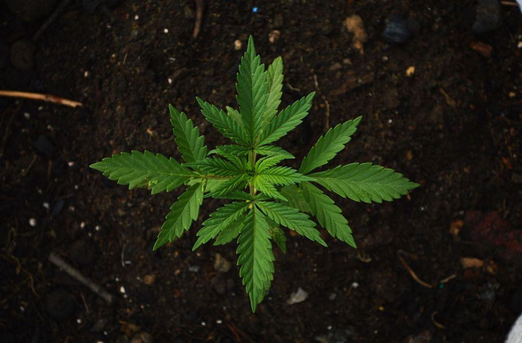 Der 26 Jahre alte Angeklagte aus Weissach hat Marihuana verkauft und damit insgesamt 170 Euro verdient. Foto: Pixabay