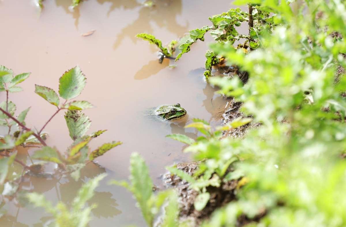 Unbekannte versiegeln eine  Dolenöffnung beim Holzgerlinger Mönchsbrunnen. Sollte dadurch ein Biotop entstehen? Foto: Stefanie Schlecht/Stefanie Schlecht