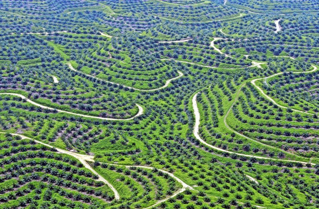 Für die riesigen Palmölplantagen werden in Indonesien jährlich Tausende Hektar Regenwald abgeholzt und abgebrannt. Foto: