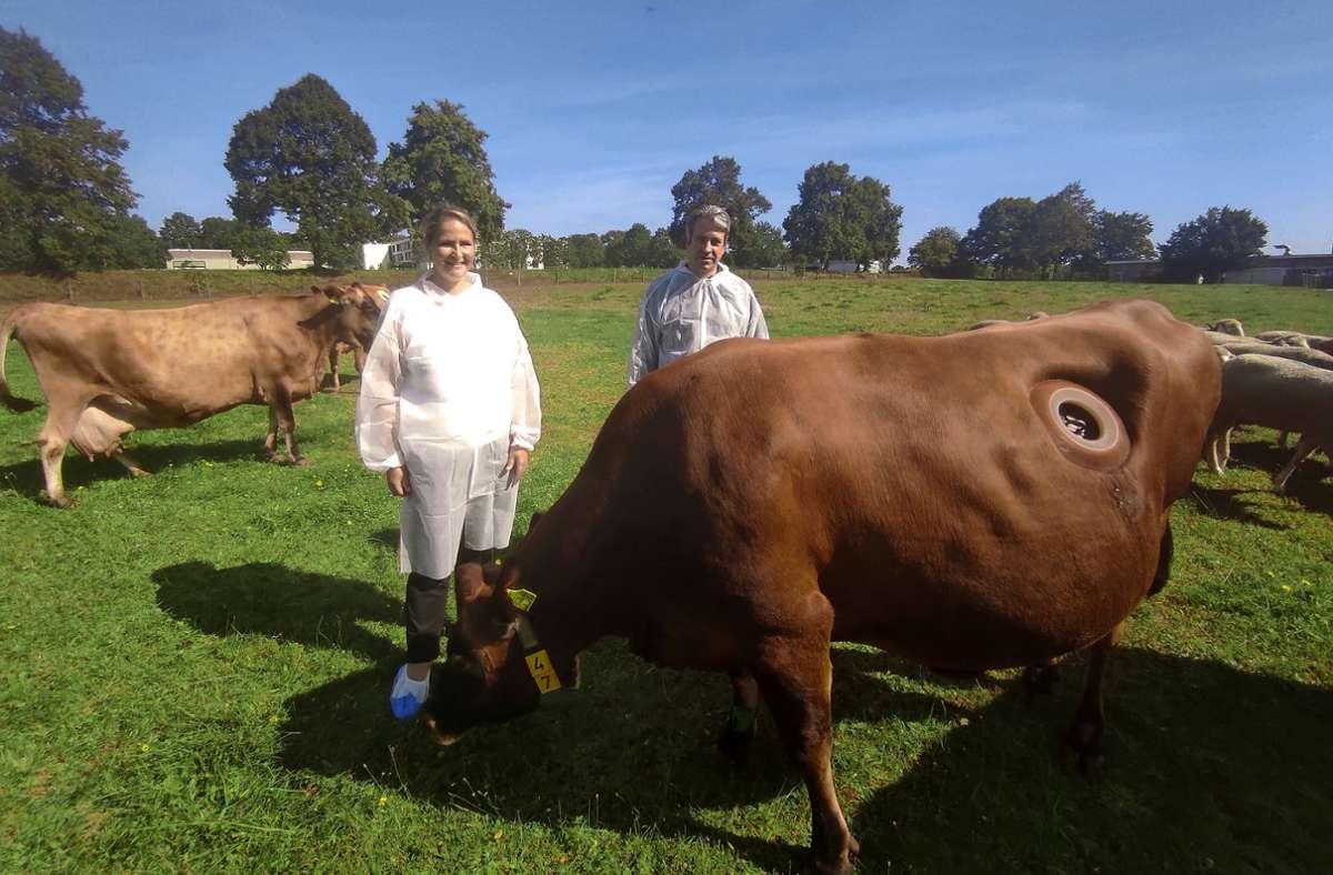 In Hohenheim leben Kühe mit Fistel. Jana Seifert forscht an ihnen, Thomas Kufer arbeitet mit Labormäusen. Foto: Frank Wahlenmaier