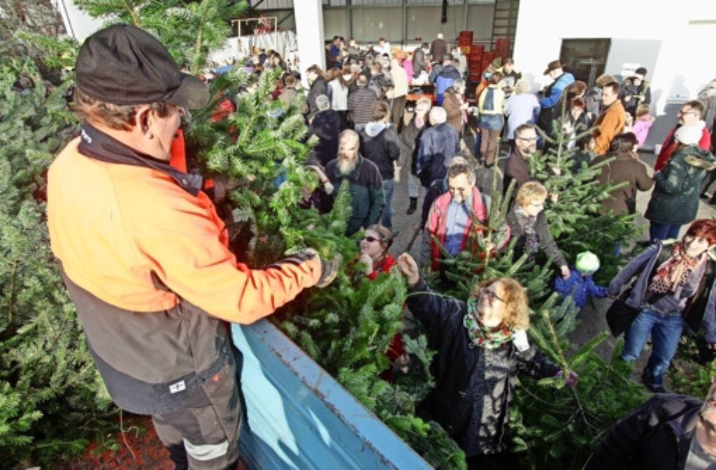 Die meisten  Christbäume wurden gleich vom Wagen herab verkauft. Foto: