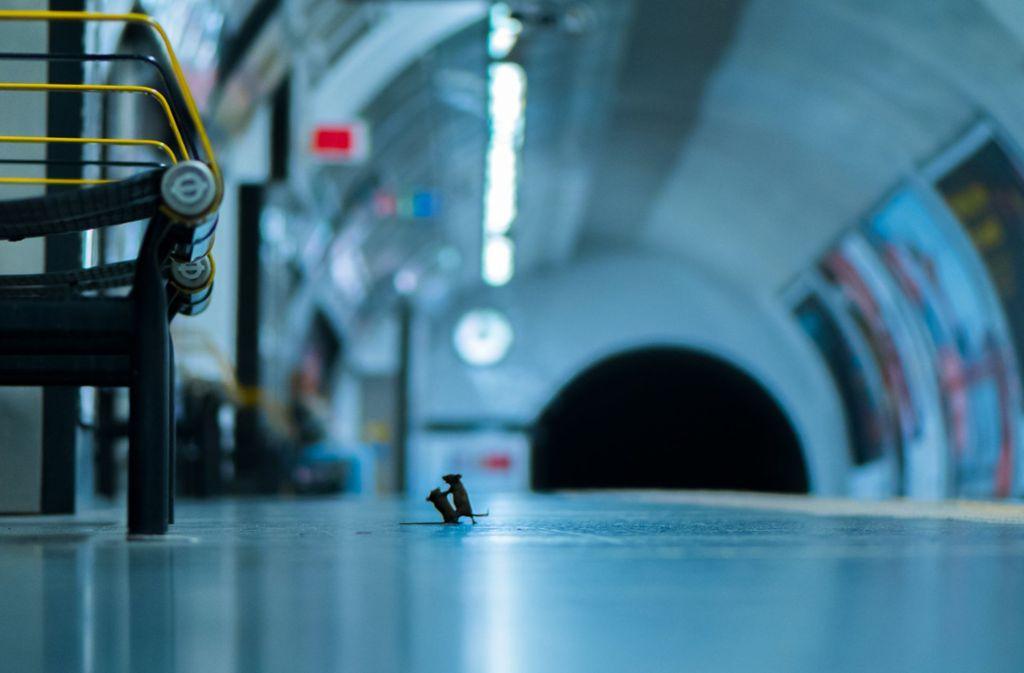 Dieses Foto hat sich beim Publikum durchgesetzt: Zwei Mäuse streiten um ein paar Krümel in einer Londoner U-Bahnstation. Foto: dpa/Sam Rowley