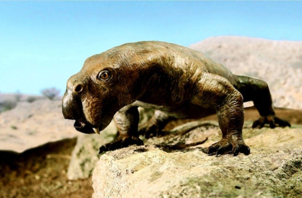 Ähnelt mit seinen Hauern ein bisschen dem Walross: der Säugetiervorfahr Diictodon. Ähnelt mit seinen Hauern ein bisschen dem Walross: der Säugetiervorfahr Diictodon. Der Säugetiervorfahr Diictodon ähnelt mit seinen Hauern dem Walross. Foto: SMNS