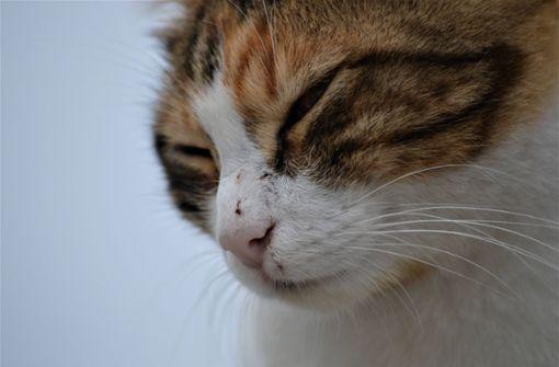 Unbekannter schießt Katze an – Serientäter am Werk?