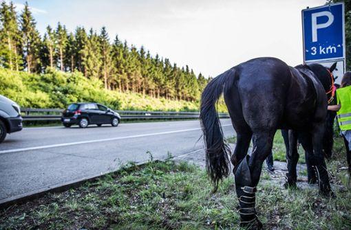 Verkehrsteilnehmer fangen Pferd auf Überholspur der A5 ein