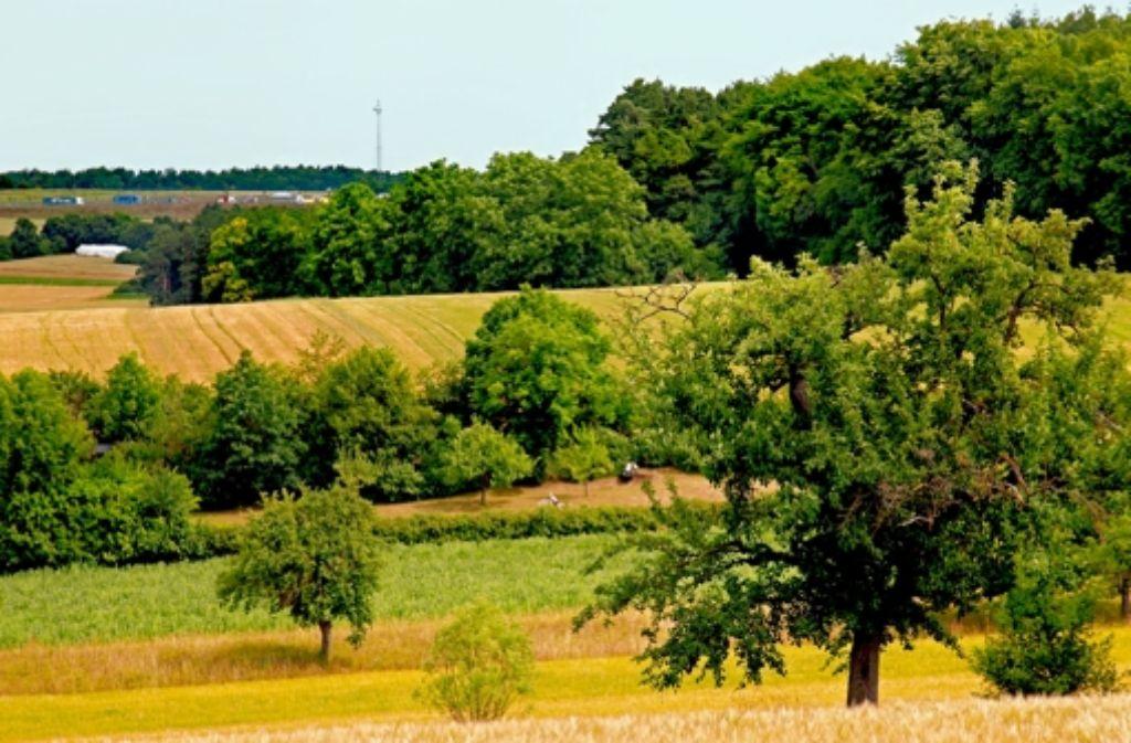 Die Wälder bei Heimsheim.Foto:factum/Krieger Foto: