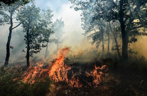Rund 10.000 Menschen vor Waldbränden in Sicherheit gebracht