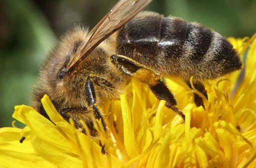 Diebe stehlen Tausende Bienen