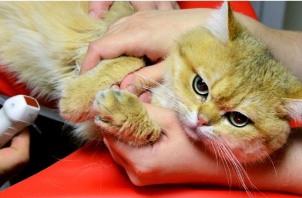 Gegen streunende Katz Foto: dpa-Zentralbild