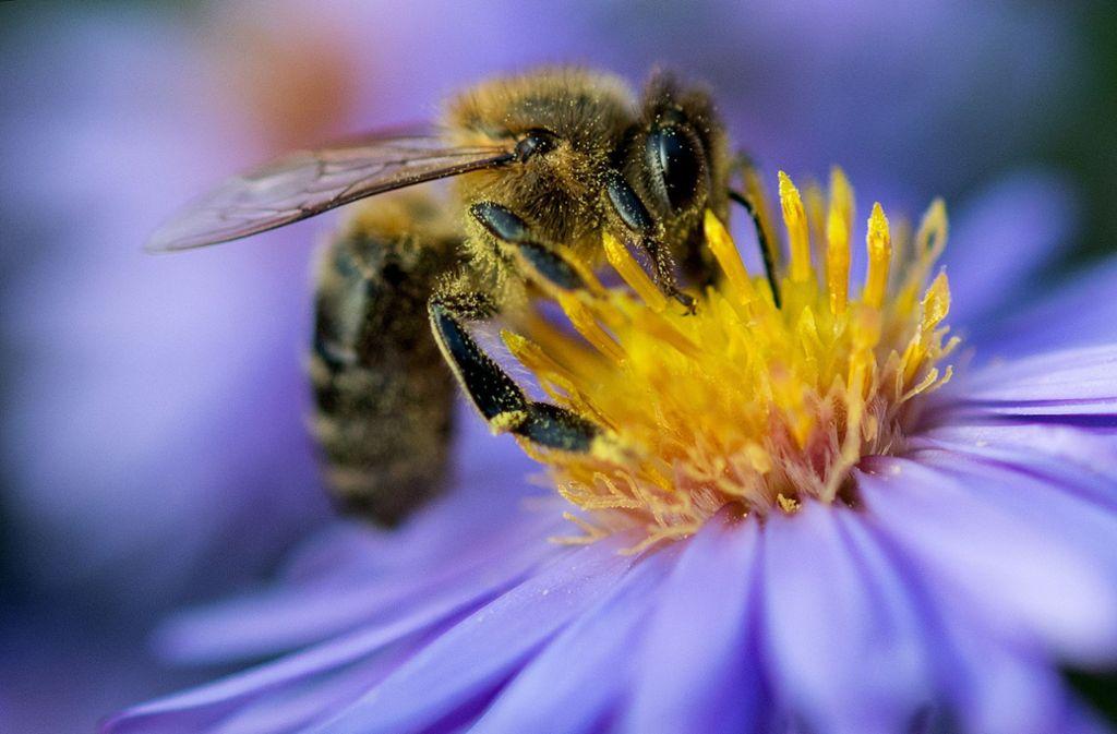 Beim Imkertag dreht sich alles um Bienen und Insekten. Foto: dpa-Zentralbild
