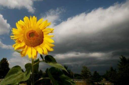 Am Donnerstag gibt es sowohl Sonnenschein als auch Schauer. Foto: dpa