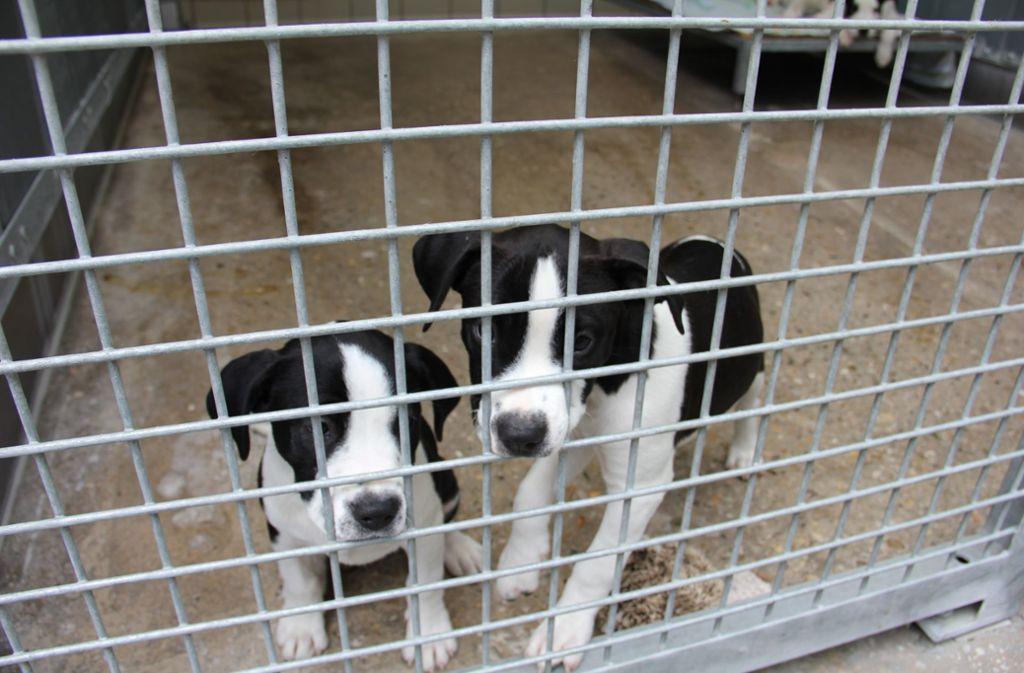 Im Tierheim in Botnang sind derzeit bis zu 100 Hunde untergebracht. Foto: Torsten Ströbele