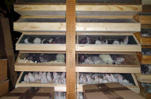 Tiertransporte sollen besser kontrolliert werden