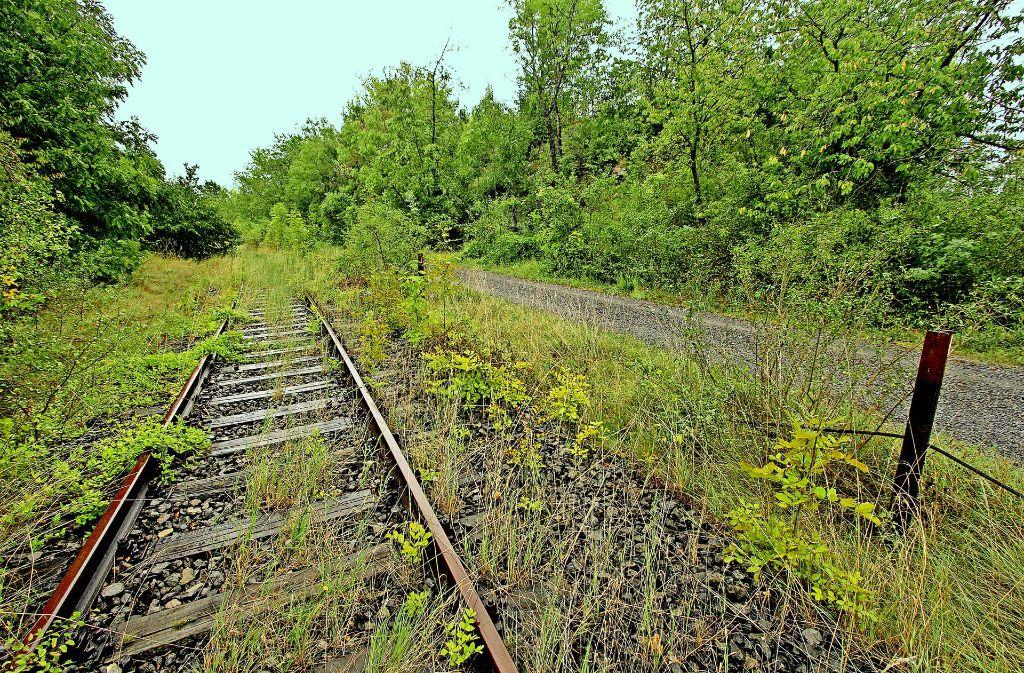 Überwuchert, zugewachsen, teilweise zugebaut: das alte WEG-Gleis in Vaihingen ist in keinem guten Zustand. Foto: factum/Archiv