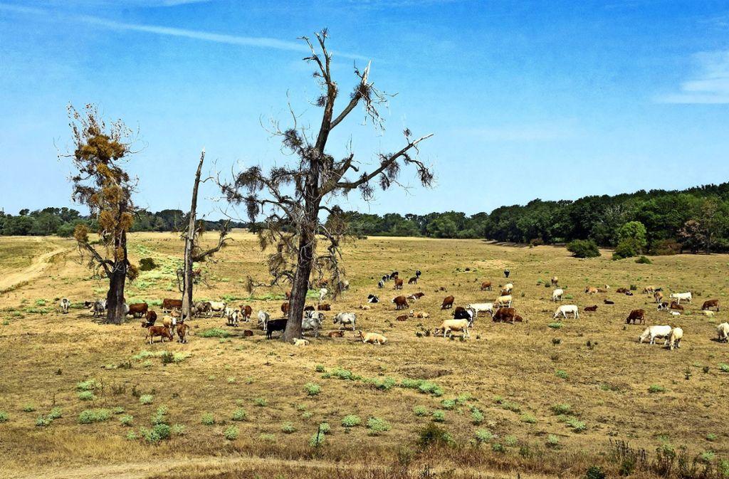 In vielen Regionen Deutschlands macht die Dürre Pflanzen und Tieren schwer zu schaffen. Foto: dpa