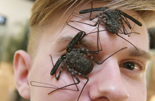 """Das große Krabbeln unter """"Bugs and Science"""""""