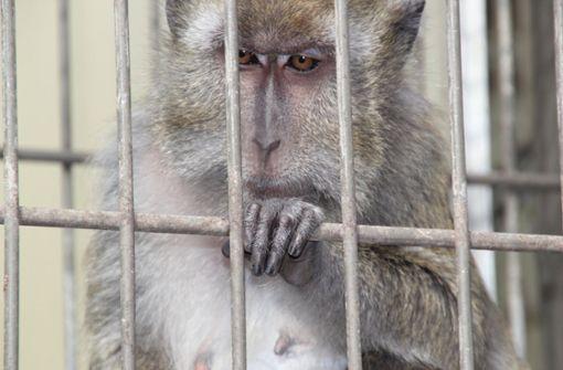 Tierversuche könnten Debatte um Fahrverbote beeinflussen
