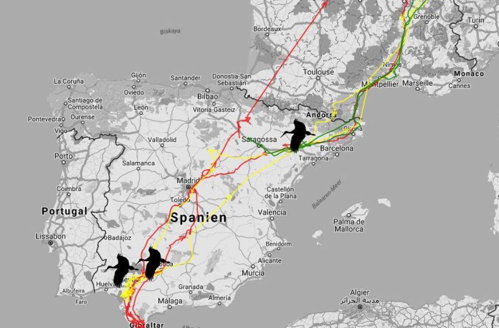 Auf einer Livekarte zeigen wir die aktuelle Position der von uns getrackten Störche Ingo, Libi und Zozu. Foto: StZN / Google