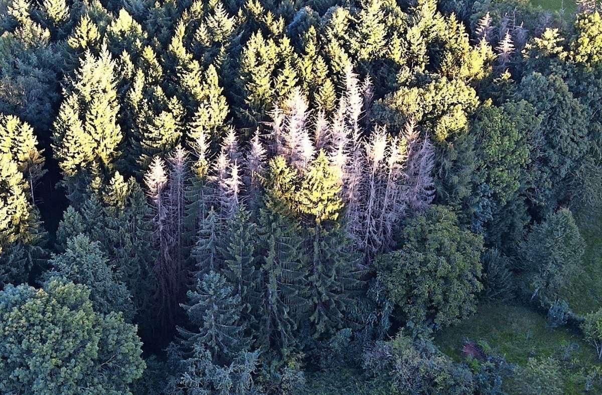 Eine Folge des Klimawandels sind sterbende Bäume. Klimaschutzmanager der kommunen  sollen gegensteuern. Foto: Philipp Braitinger