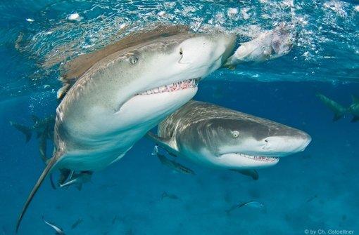 Haihaut anfassen