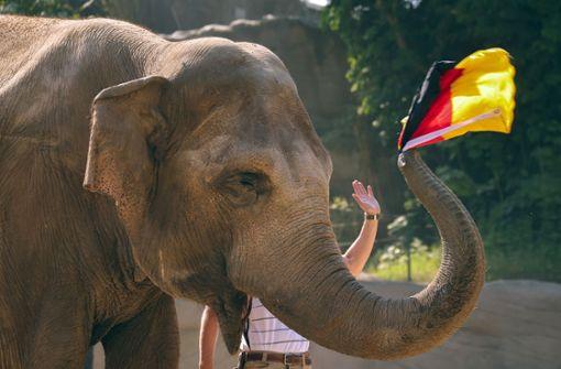 """So tippt Elefanten-Orakel """"Yashoda"""" das Spiel gegen Portugal"""