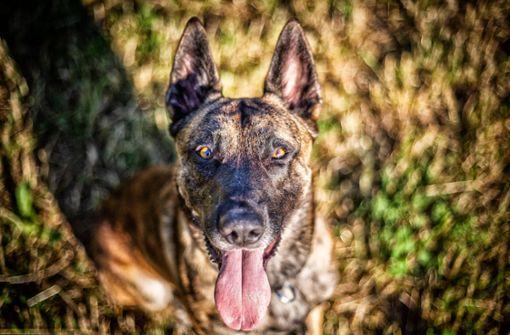 Unbekannte sperren Hund in Auto ein – Tier stirbt an Hitzschlag