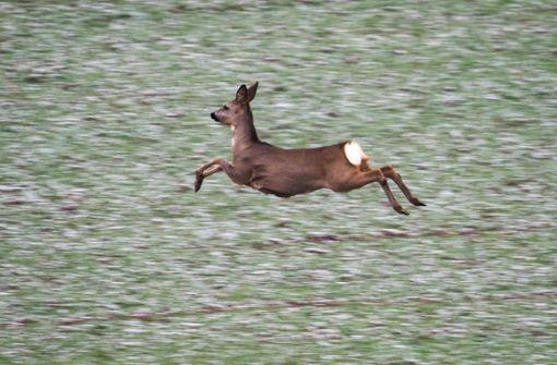 Mutmaßlicher Wilderer schlägt zu