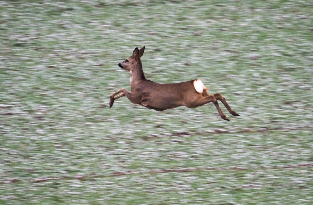 Im Rems-Murr-Kreis hat ein Wilderer zugeschlagen (Symbolbild). Foto: dpa/Frank Rumpenhorst