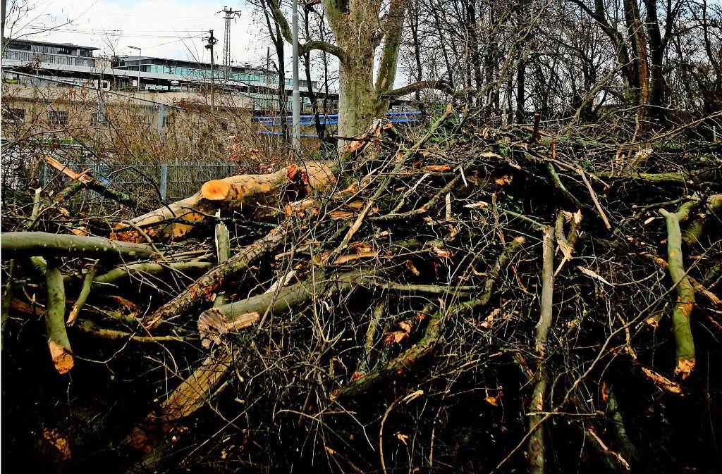 Grüngut muss auf dem Häckselplatz entsorgt werden. Foto: Lichtgut/Piechowski