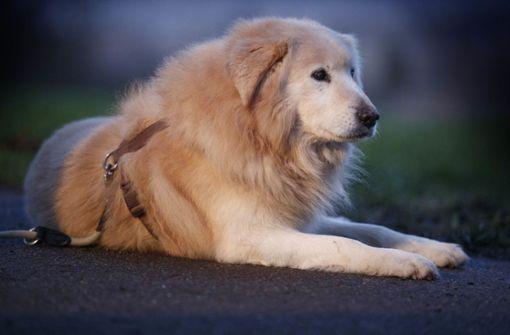Der Trend geht eindeutig zum Familienhund