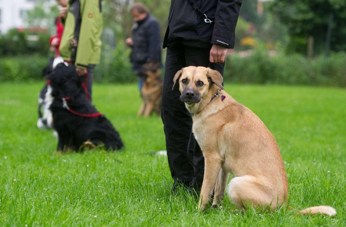 Auch ältere Menschen, die sich einen Hund anschaffen, müssen in Zukunft einen Hundeführerschein machen. Foto: dpa/Sebastian Kahnert