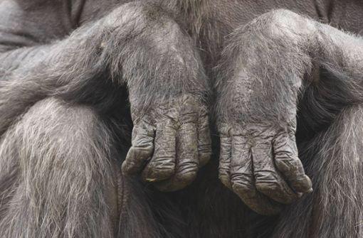 Hand und Fuß von Affen in Wald gefunden