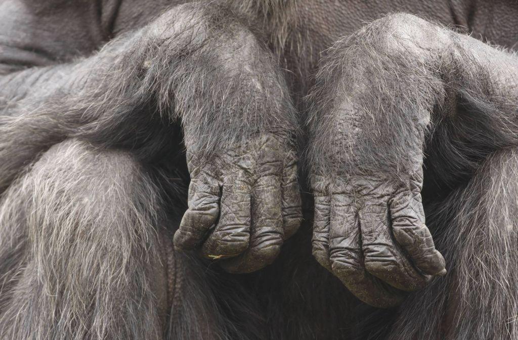 Eine Affenhand, die im Wald gefunden wurde, gibt Rätsel auf. (Symbolbild) Foto: imago images/Shotshop/Amitaf via www.imago-images.de
