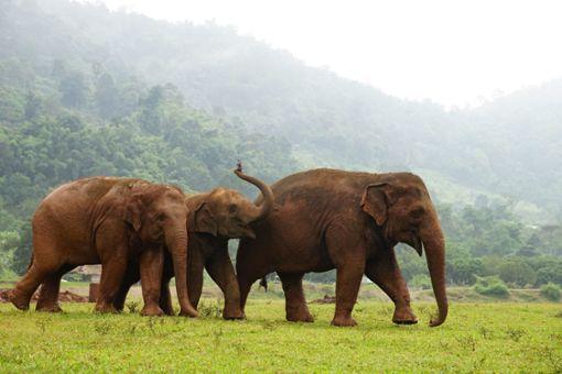 Hier bekommen gequälte Elefanten ein neues Zuhause