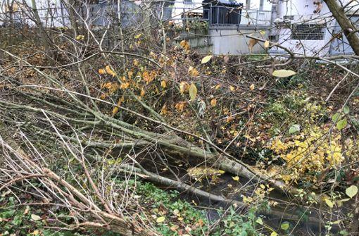 Stadt schneidet Bäume zurück