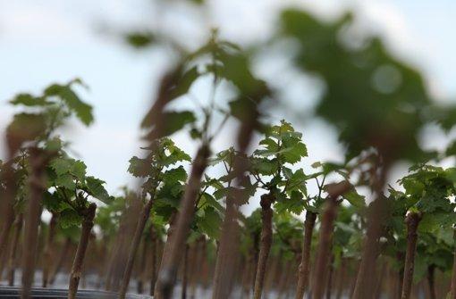 Virtuelle Plattform für Pflanzenanbauer